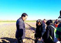 ازدید دکتر سعید باستانی از لوکیشن فیلمبرداری فیلم سینمایی(گنج سرخ) کاری با موضوع زعفران، در پایتخت طلای سرخ ایران  به کارگردانی امید عشقی   🗓جمعه ۸ آبان۹۶